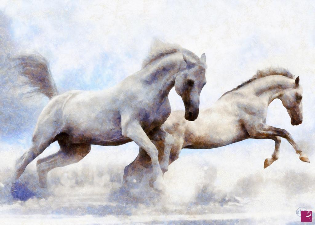 Vendita quadro cavalli bianchi at65 pitturiamo for Immagini di cavalli da disegnare