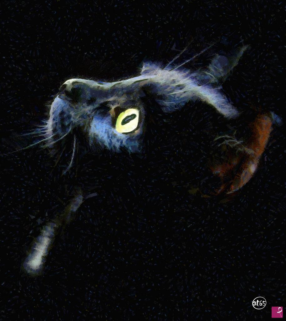 Vendita Quadro Il Gatto Nero At65 Pitturiamo